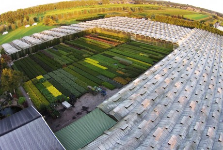 Boomkwekerij Heijmans - Biezenmortel